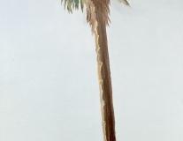 Palmier croquis