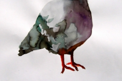 Pigeon aquarelle 6