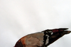 Pigeon aquarelle 12