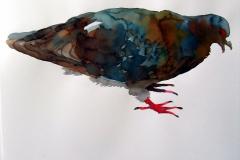 Pigeon aquarelle 22