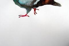 Pigeon aquarelle 26