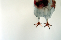 Pigeon aquarelle 27