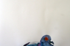 Pigeon aquarelle 28