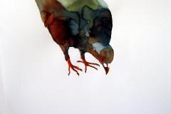 Pigeon aquarelle 30