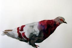 Pigeon aquarelle 32