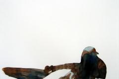 Pigeon aquarelle 34