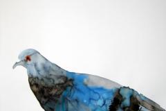 Pigeon aquarelle 38