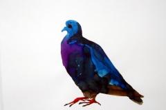 Pigeon aquarelle 46