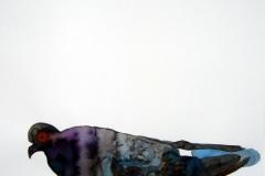 Pigeon aquarelle 47
