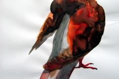 Pigeon aquarelle 63