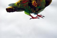 Pigeon aquarelle 88