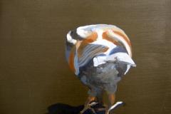 Pigeon 22