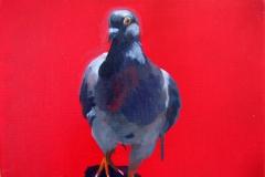 Pigeon 36